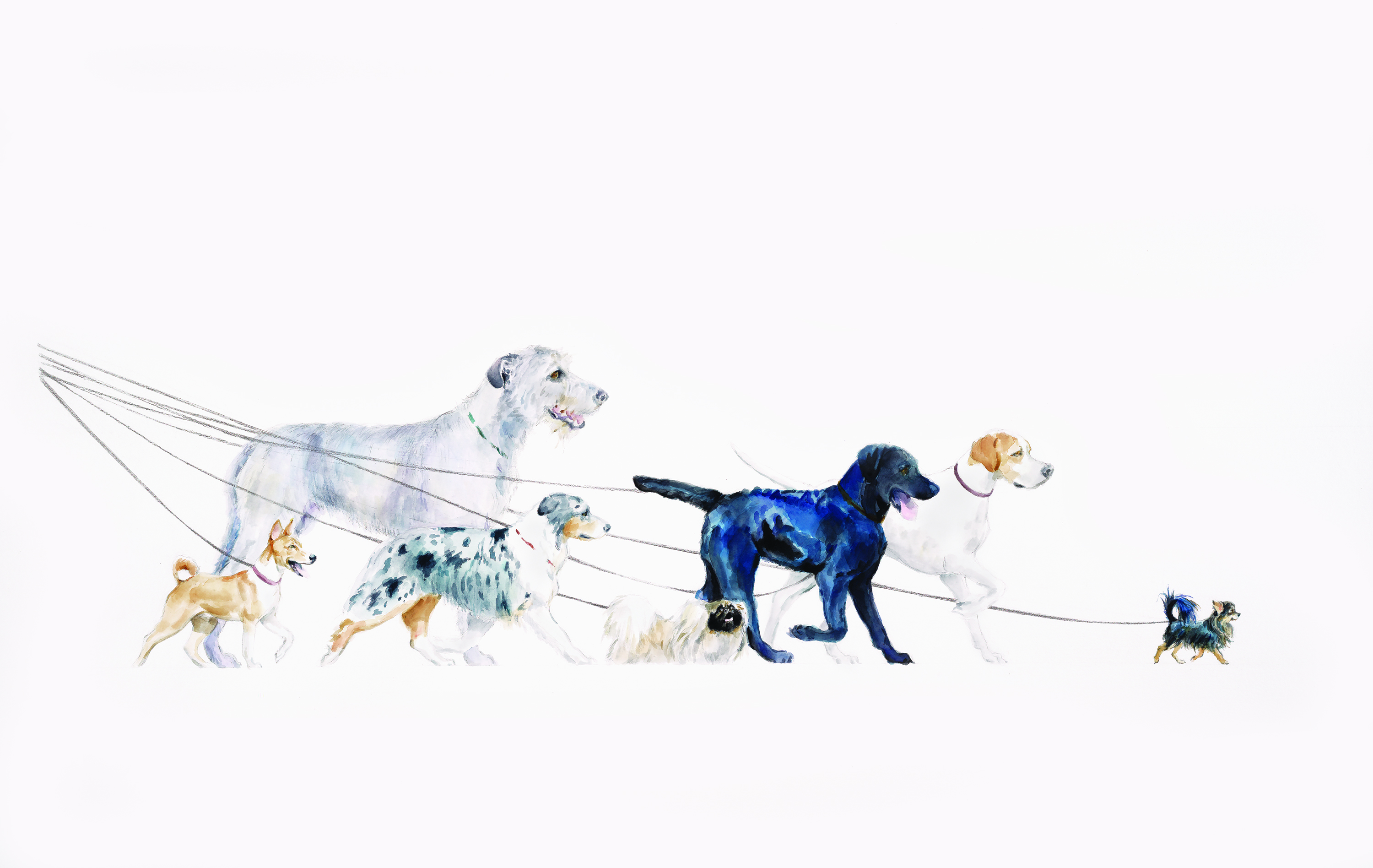 2017 Westminster Kennel Club Artwork Competition